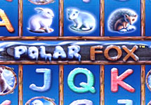 Polar Fox — casino-avtomaty.com